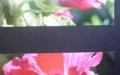"""Wystawa fotografii Bogumiły Ostrowskiej pt. """"Kolor kwiatu. Kwiat koloru"""" w Bibliotece w Jerzmanowicach wrzesień-październik 2021"""
